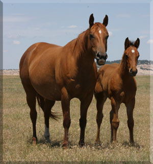 Stoddard Ranch Colt